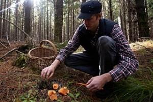 houbařská sezona je v plném proudu