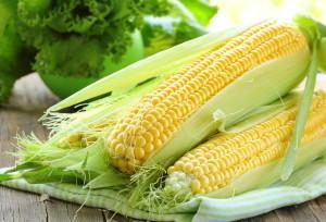 Kukuřici můžete vypěstovat i na své zahradě.
