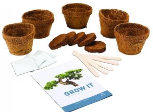 vypěstujte si krásnou bonsai