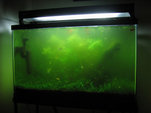 green-aquarium-water