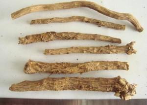 kořen šišáku