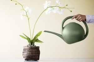 watering-orchids-resized