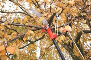 Připravte stromy na správný zimní spánek /