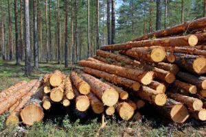 Dřevo můžete prodat za výhodné ceny /