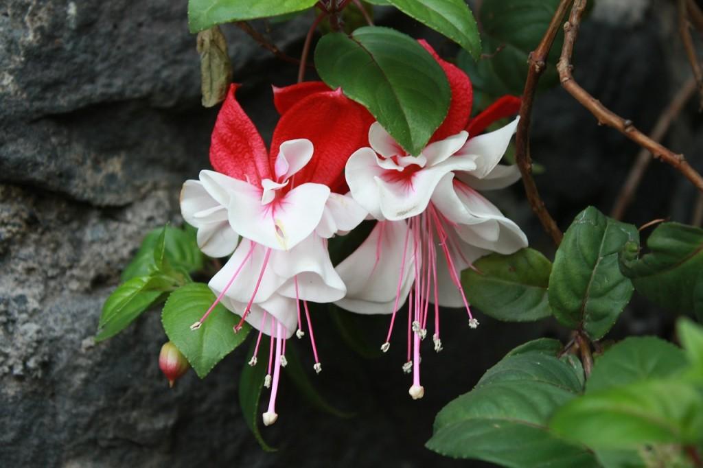 flower-582411_1280