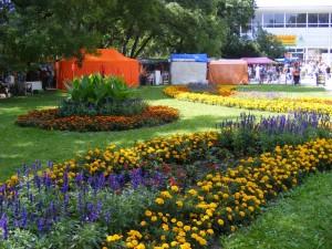 Letničky jsou ozdobou mnoha zahrad