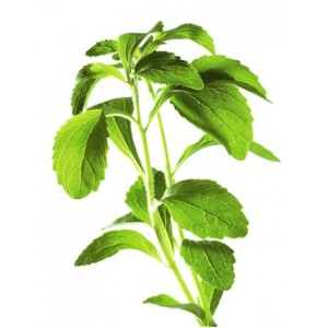 stevie-sladka-list-stevia-rebaudiana