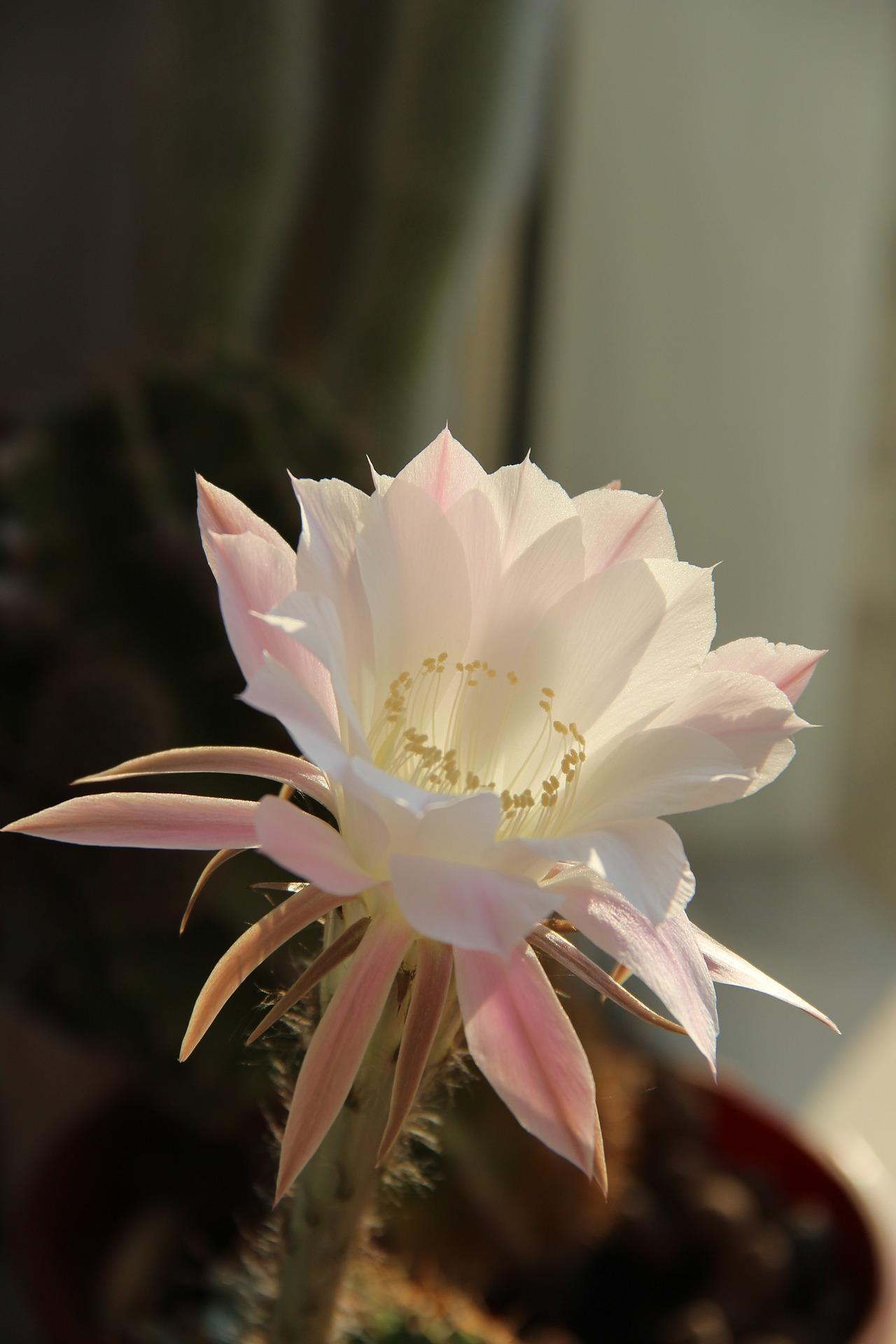 flower-1049820_1920